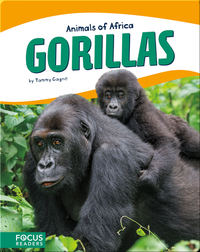 Animals of Africa: Gorillas