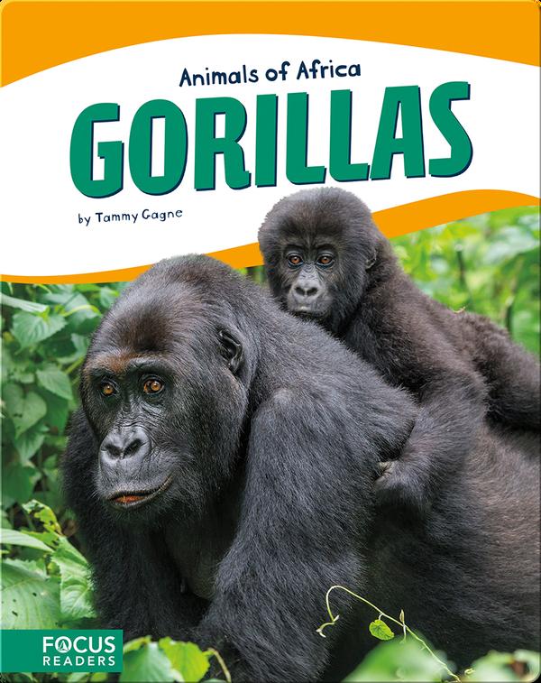 Animals of Africa: Gorillas