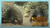 Our Two Porcupines: Kemosabe & Kizmit