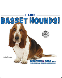 I Like Basset Hounds!