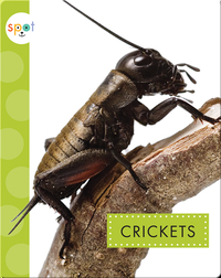 Creepy Crawlies: Crickets