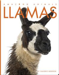 Amazing Animals: Llamas