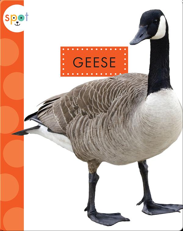 Backyard Animals: Geese