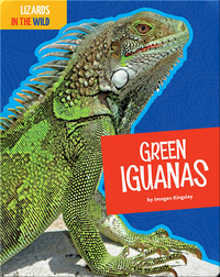 Lizards In The Wild: Green Iguanas