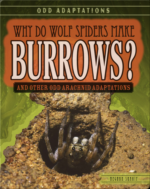 Why Do Wolf Spiders Make Burrows? And Other Odd Arachnid Adaptations