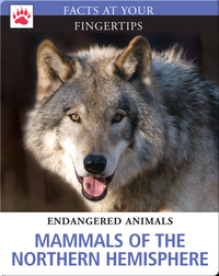 Mammals of the Northern Hemisphere