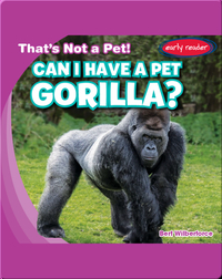Can I Have a Pet Gorilla?