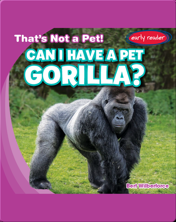 Can I Have a Pet Gorilla?