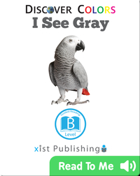 Discover Colors: I See Gray