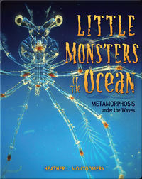Little Monsters of the Ocean: Metamorphosis under the Waves