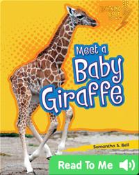 Meet a Baby Giraffe