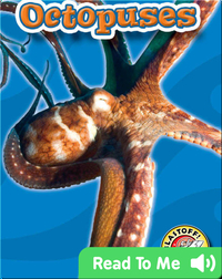 Octopuses: Oceans Alive