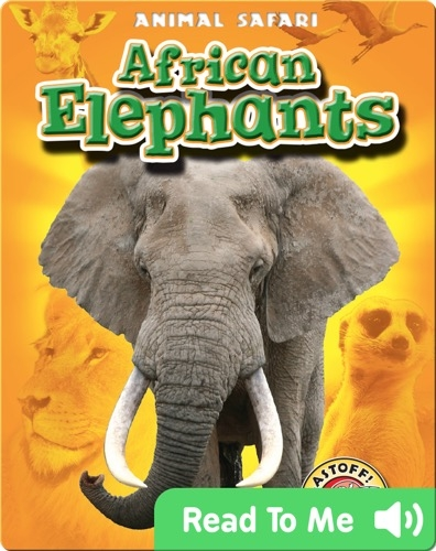 African Elephants: Animal Safari