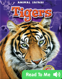Tigers: Animal Safari