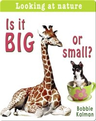 Is it Big or Small?