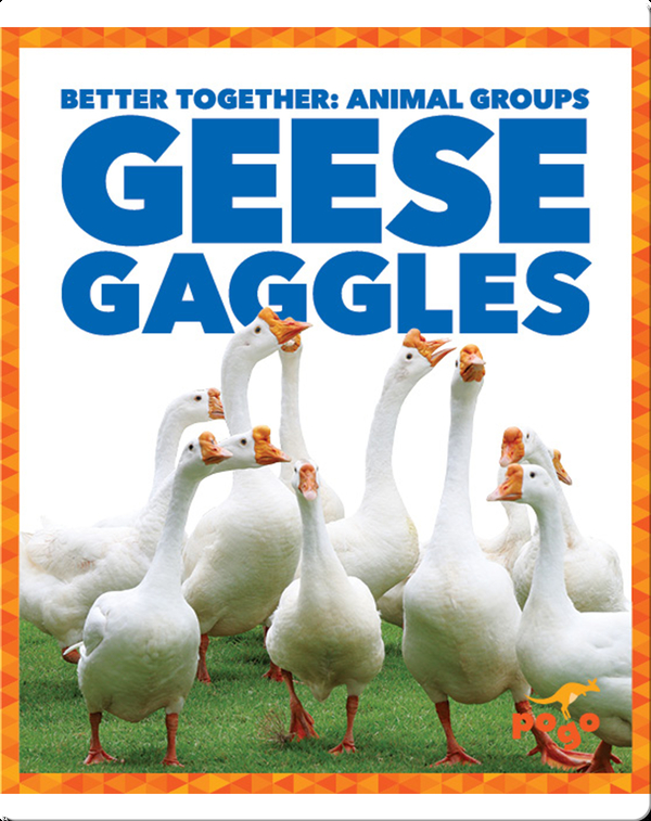 Geese Gaggles