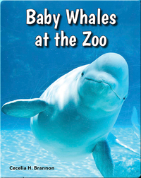 Baby Whales at the Zoo