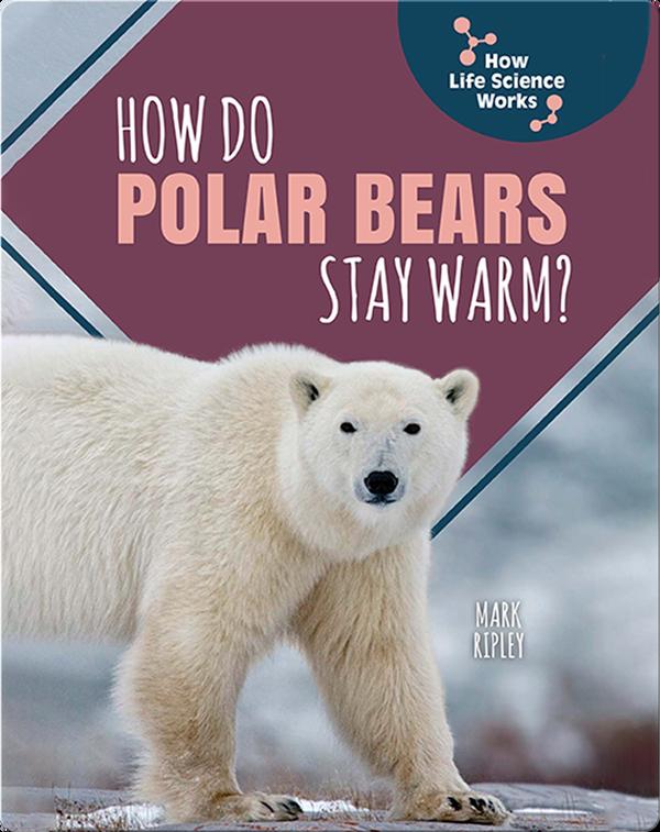 How Do Polar Bears Stay Warm?