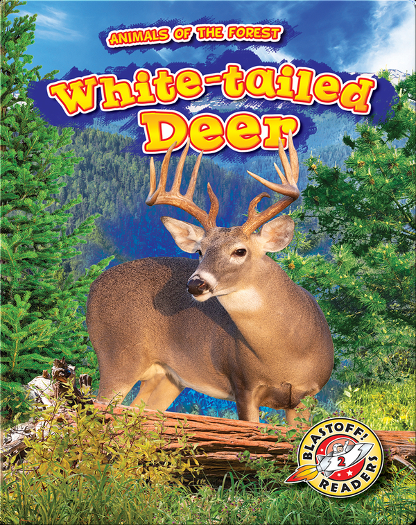 Animals of the Forest: White-tailed Deer