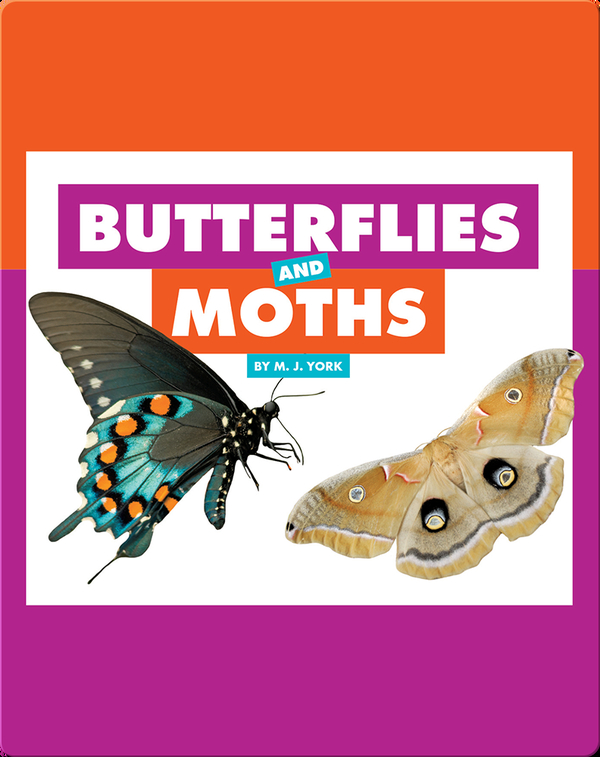Comparing Animal Differences: Butterflies and Moths