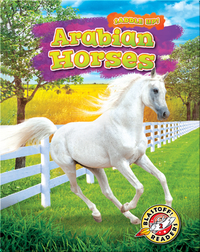 Saddle Up!: Arabian Horses