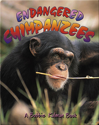 Endangered Chimpanzees