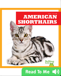 Cat Club: American Shorthairs
