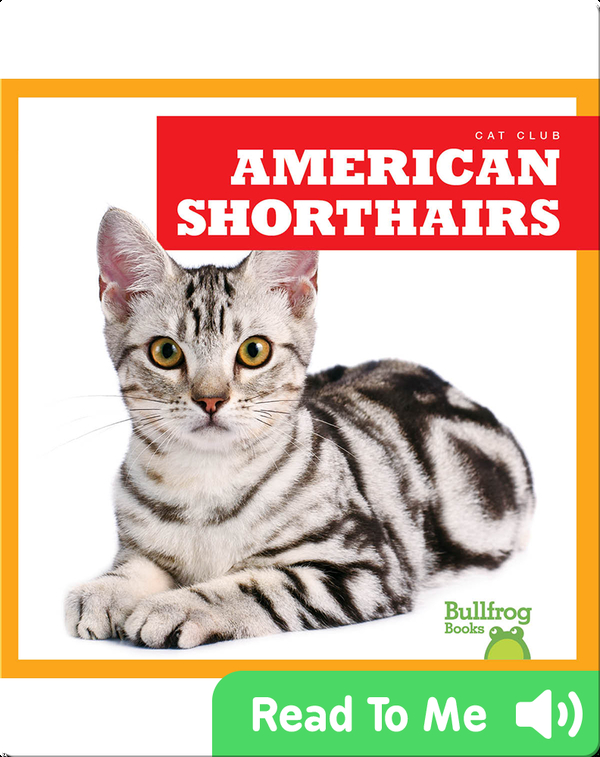 Cat Club: American Shorthairs