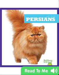 Cat Club: Persians