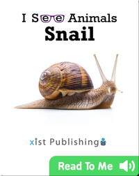 I See Animals: Snail