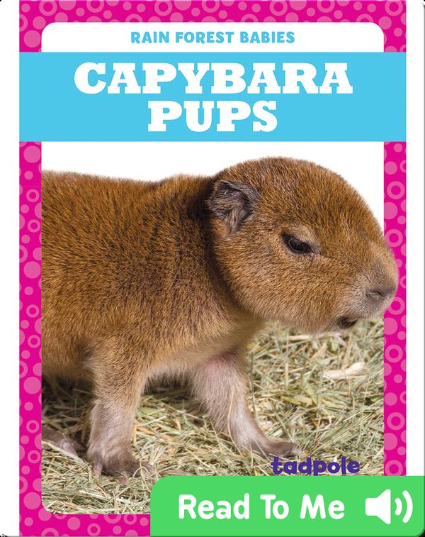 Rain Forest Babies: Capybara Pups
