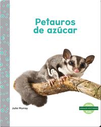 Animales nocturnos: Petauros de azúcar