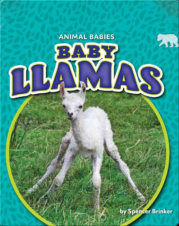 Animals Babies: Baby Llamas