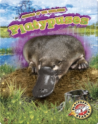 Animals of the Wetlands: Platypuses