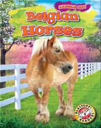 Saddle Up!: Belgian Horses