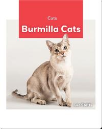 Cats: Burmilla Cats