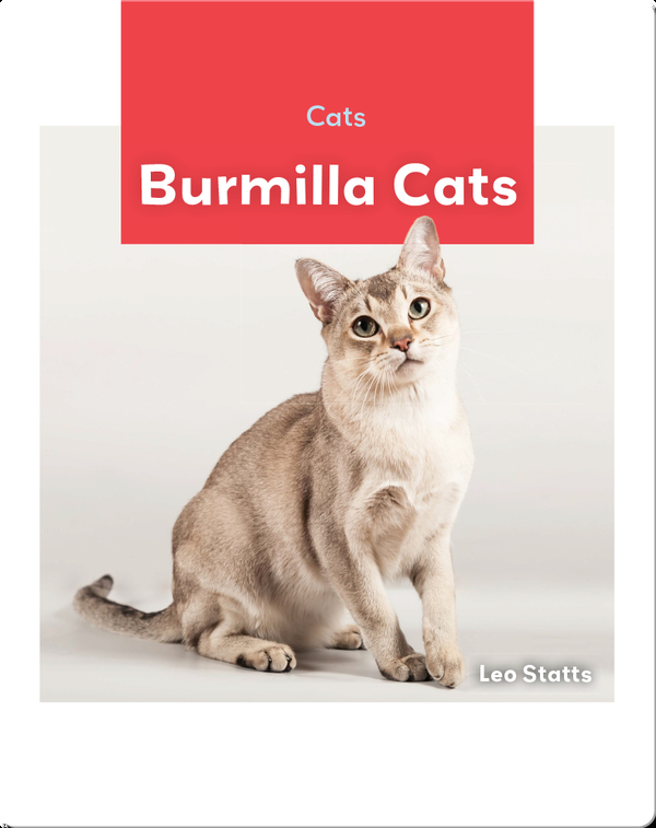 Cats: Burmilla Cats