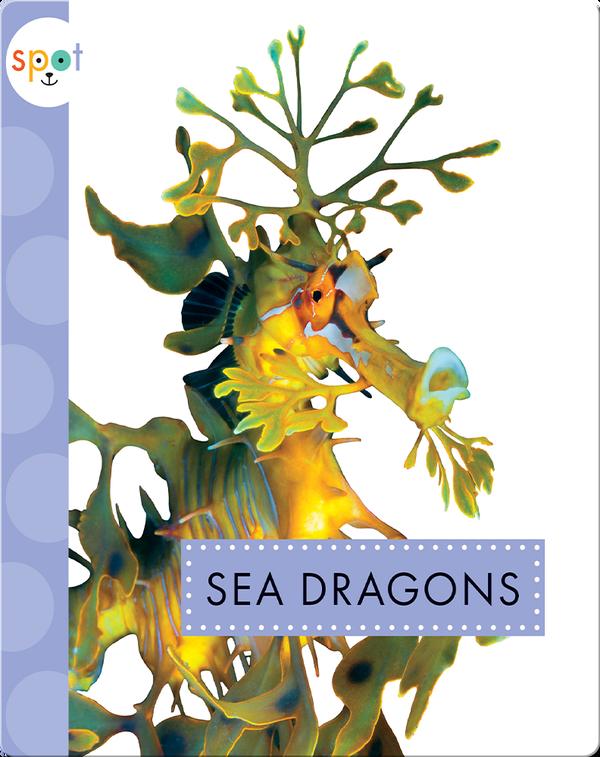 Ocean Animals: Sea Dragons
