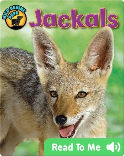 Jackals (Wild Canine Pups)