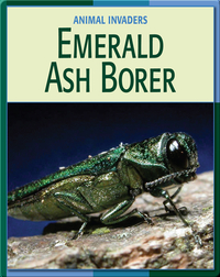 Animal Invaders: Emerald Ash Borer