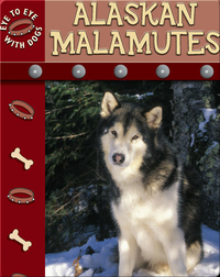 Eye To Eye With Dogs: Alaskan Malamutes