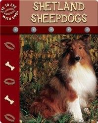 Eye To Eye With Dogs: Shetland Sheepdogs