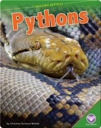 Amazing Reptiles: Pythons