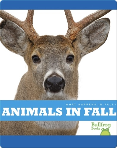 What Happens In Fall? Animals In Fall
