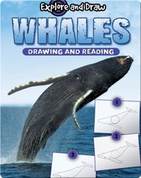 Explore And Draw: Whales