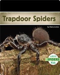 Trapdoor Spiders
