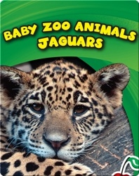 Baby Zoo Animals: Jaguars