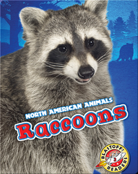 North American Animals: Raccoons