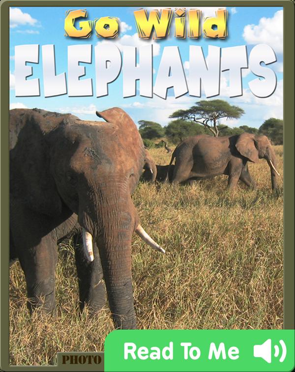 Go Wild Elephants