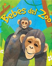 Bebés del Zoo